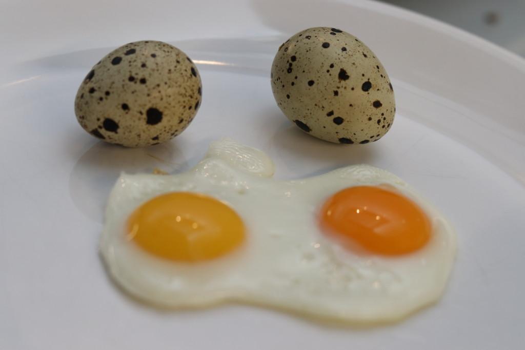 Křepelčí vajíčka